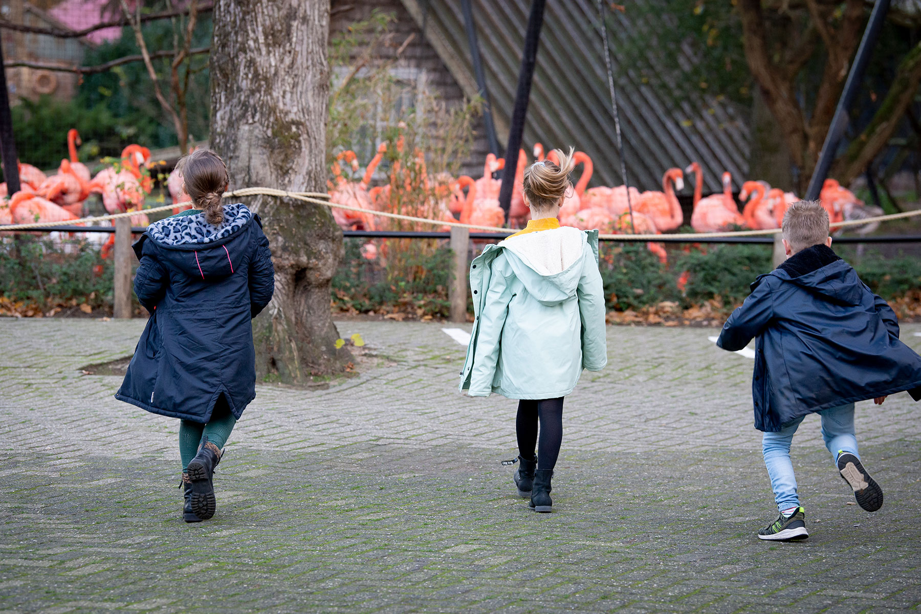 Onky Donky Ouwehands Dierenpark